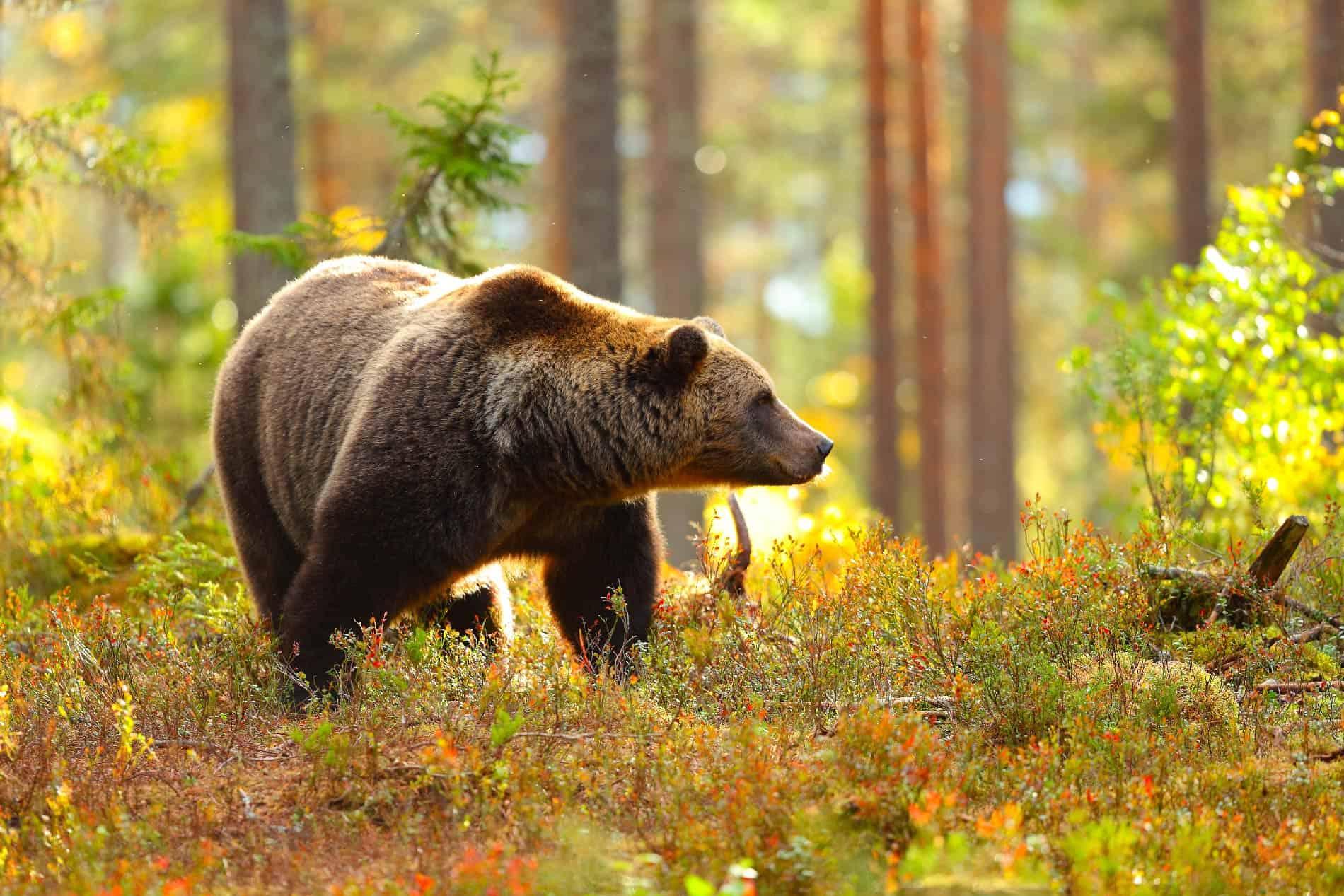 Ursus Adventures: rispetto per la natura