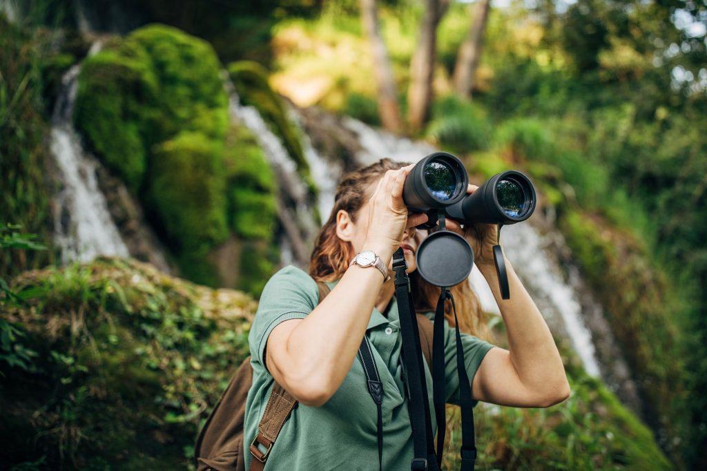 Osserva gli animali selvatici in ambiente naturale